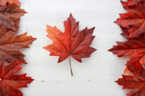 documents-pour-le-pvt-canada-2016