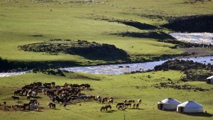 Mongolie paysage