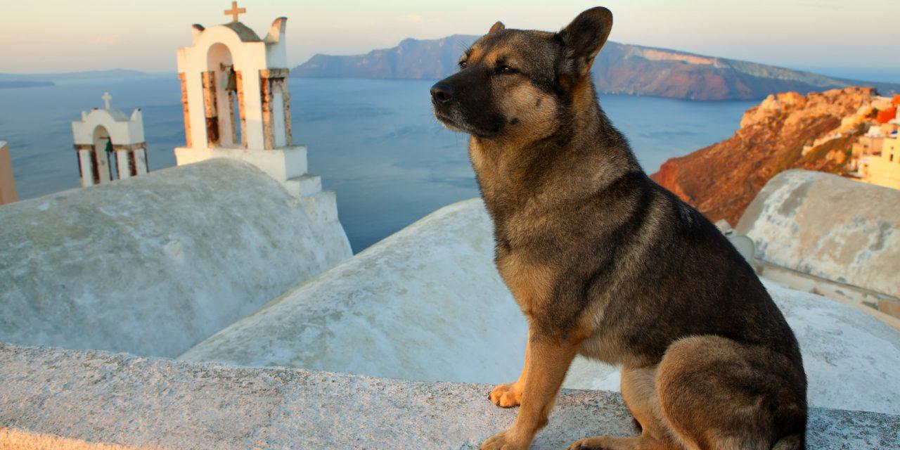 Peut-on emmener son chien en vacances en avion ?