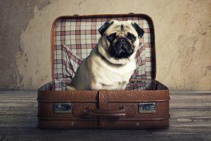 Voyage chien en avion